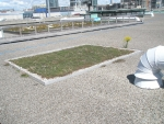Green roof project.JPG